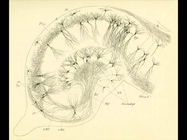 D. Santiago Ramon y Cajal- A life committed to neuroscience