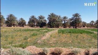 Forum International de Zagora : Plaidoyer pour le développement et la valorisation des oasis