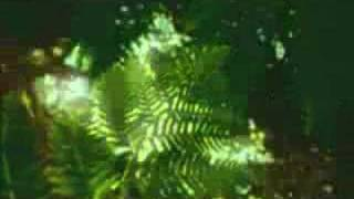 Rain Forest - Ambient New Age Reiki Music Video -By Equinox