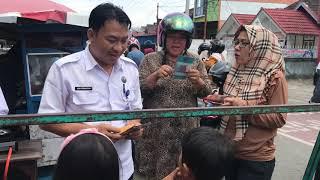 BNN Kota Lubuklinggau Insert Konten Informasi P4GN di Komplek Sekolah Jalan Garuda Putih
