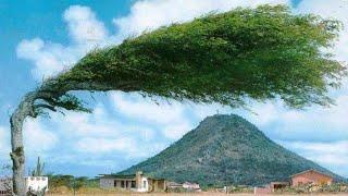 10 सबसे अजीब पेड़ | Most amazing Trees in the world