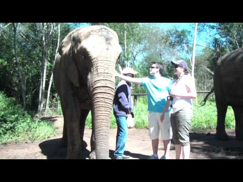 Elephant-Sanctuary-Plettenberg-Bay.MP4