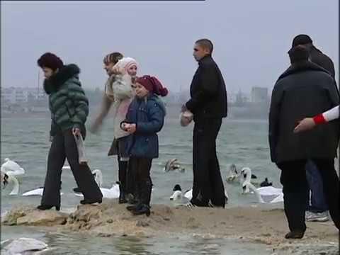 Лебеди Море Евпатория