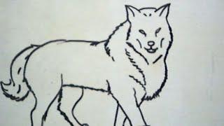 Cara Menggambar Serigala (How to Draw a Wolf)
