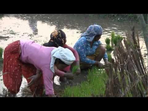Leven in Chitwan