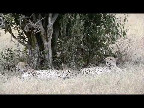 kenya safari  - 2012