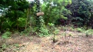 Jungle Garden   Cleaning the Land
