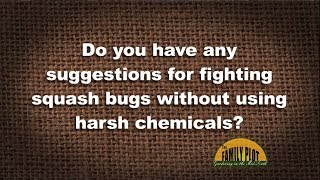 Q&A – How do I fight squash bugs without using harsh chemicals?