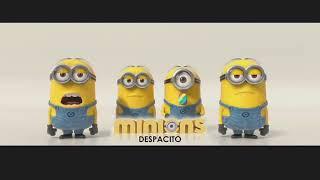 Deapacito(Minions Cover)