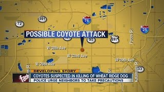 Coyotes suspected in killing of Wheat Ridge dog