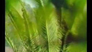 Cantor Luiz Artur - Pois é (Clipe antigo)