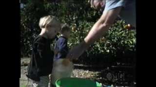Teletubbies - Orange Picking