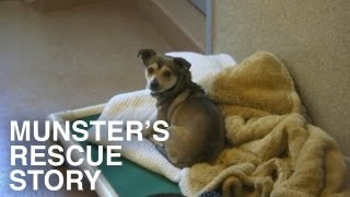 Animal Shelter to Home. A second chance for Munster! feat. Dunder