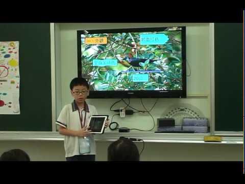 探索輝椋鳥 - YouTube
