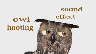 How A Owl Hooting - Sound Effect - Animation