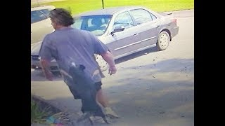 Dog chases man after being abandoned at Hawkins shelter 9-29-18