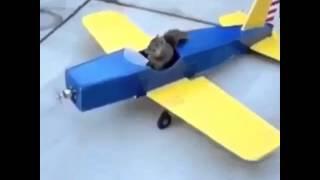Squirrel flys an plane ( song of little Einstein )