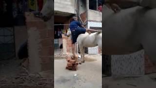 Piada do cavalo