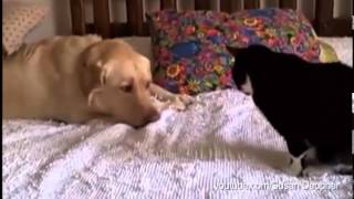 Dogs Annoying Cats with Their Friendship - Huffington Post
