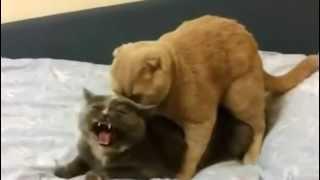 Ops buraco errado - O gato créu