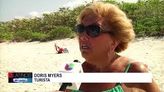 Marea roja causa muerte de peces en playas del Condado Collier
