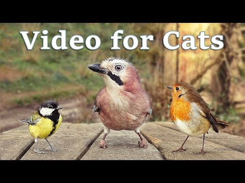 Videos for Cats to Watch – 8 Hour Bird Bonanza