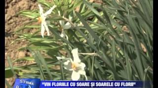 09  Vin Floriile cu soare si soarele cu Florii Bucovina TV_ro - 27-04-2113