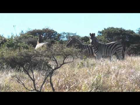 South Africa wildlife in a minute