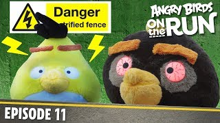 Angry Birds on The Run | Zapped Chuck - S1 Ep11