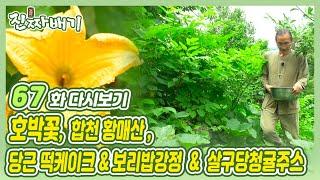 진짜배기 67화 다시보기 (호박꽃 / 합천 황매산 / 당근 떡케이크 & 보리밥강정 & 살구당청귤주스) 다시보기
