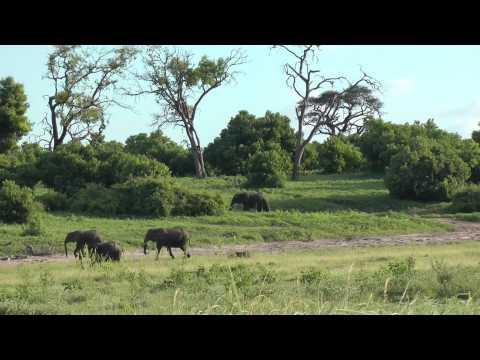 5* 1 Zambezi Queen