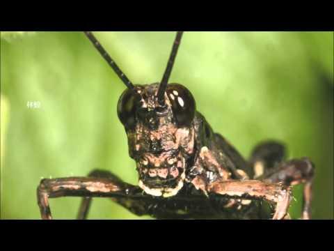 嘎嘎老師的昆蟲觀察記 - YouTube