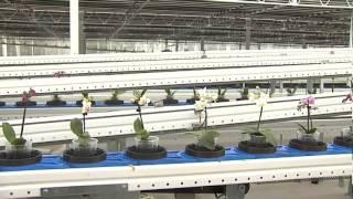 Geest orchideeen systeem 2