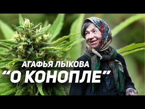 Цитата о конопле список стран где марихуана легализована