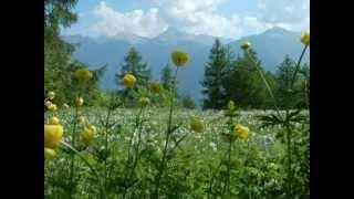 Francis Cabrel ~ La Dame de Haute-Savoie
