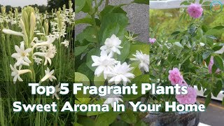 Top 5 Fragrant Plants To Spread A Sweet Aroma In Your Home