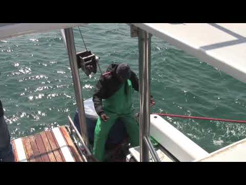 Shark Cage Diving – South Africa