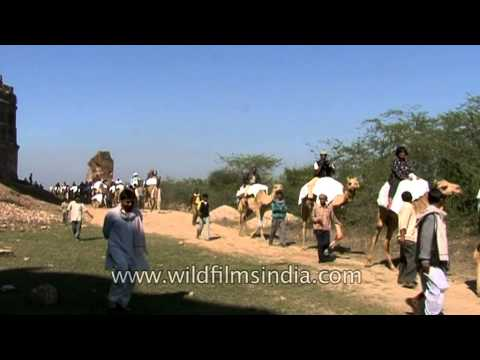 Camel ride in nearby ruins of National Chambal Sanctuary