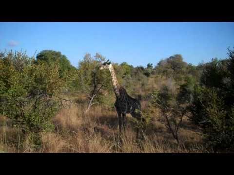 Südafrika 2010 – Tag 18 – Kruger Nationalpark