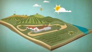 Conheça o Plano de Sustentabilidade dos Vinhos do Alentejo