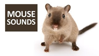 MOUSE SOUNDS to Freak your Cat Out | 5 Mice Squeaking for Cats HD Sound Effects