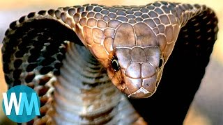 Top 10 TERRIFYING Snakes That Will Probably KILL You