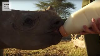 Attenborough's Blind Baby Rhino - Kenya Expedition - Earth Unplugged