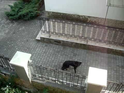 Feeding a Dog in Lviv, Ukraine