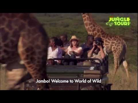 Kesari – Jungle Tours Kenya Tanzania.mp4