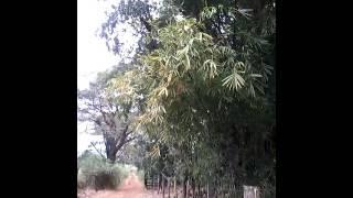 Som de vento com folhagens(2)