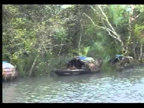 Sundarban Mangrove Forest around SUNDARBAN ECO RESORT