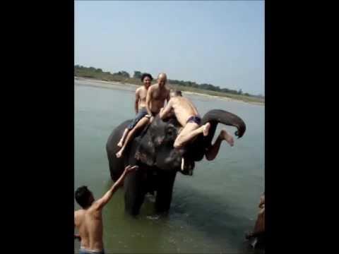 Fantastic Elephant Bathing.wmv