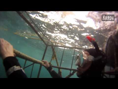 Etelä-Afrikka – häkkisukellusta haiden kanssa