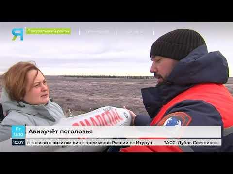 На Ямале провели подсчет северного оленя при помощи беспилотников.